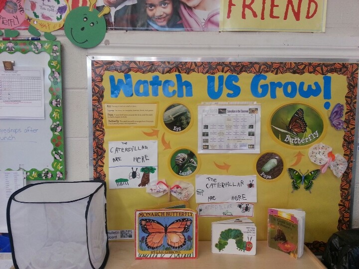 Caterpillars in the Classroom