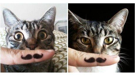 Hipster kattekillinger