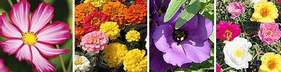 High Heat Flowers For Hot Summer Areas: Gardens Ideas, High Heat, Flowers Plants, Heat Flowers, Gardens Flowers Landscape, Sun Flowers, Garden Plants, Gardens Growing, Gardens Plants
