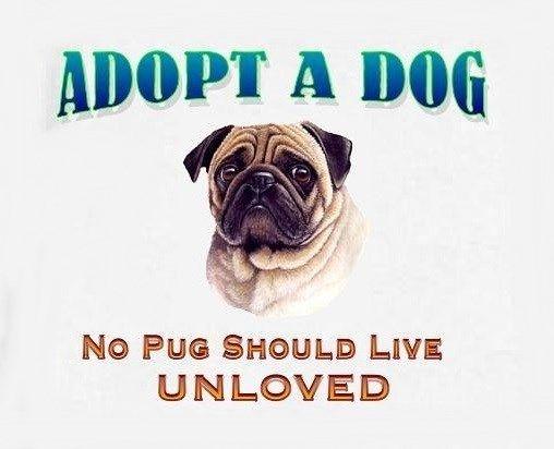 Adopt A Pug!
