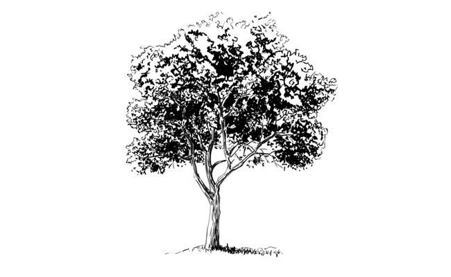 Learn how to draw a realistic tree with this easy to follow step by step approach to drawing.