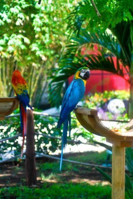 Sandos Caracol Eco Resort Riviera Maya animals macaw guacamaya