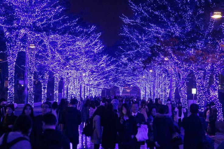 The day in photos: Nov. 23, 2016 November 23, 2016 |  Visitors enjoy the Blue Grotto Illumination event in Shibuya, Tokyo, Japan. | Photo: Splash News