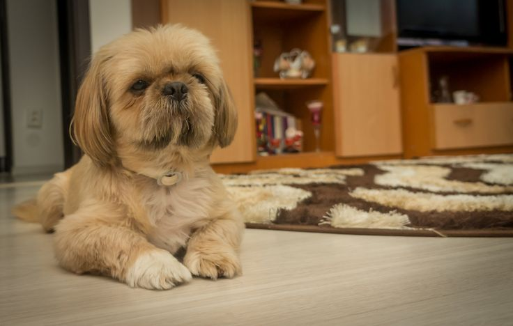 Otto - My Dog by Marius Ivan on 500px