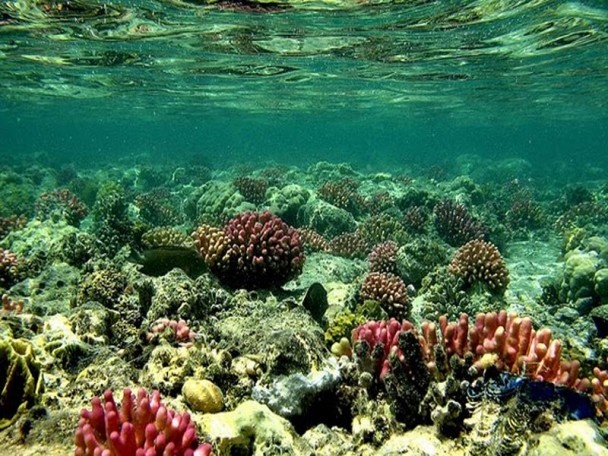 Tubbataha Reefs Natural Park is home to some of the most ...  Tubbataha Reefs...