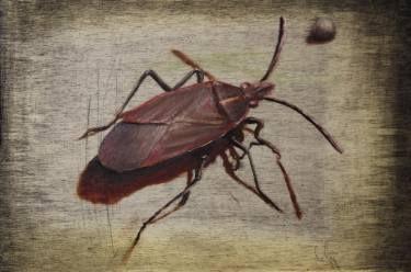 Ember Bug