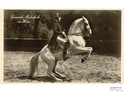 Lipizzan Historic photos Spanish Riding School