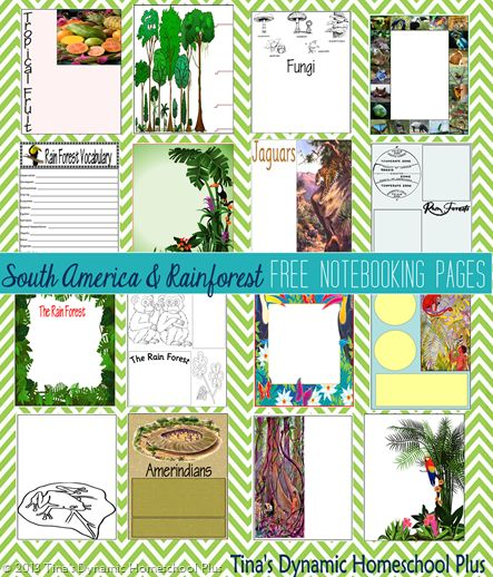 South America and Rainforest Unit Study resources