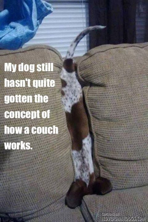 How a couch works. It's Buster!