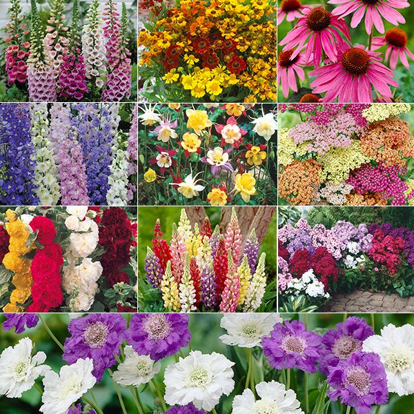 Full sun perennial cottage gardens home plants grow your for Cottage garden plants