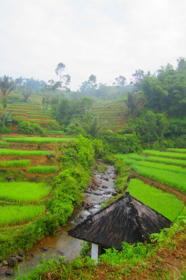 So natural. ♥ Indonesia