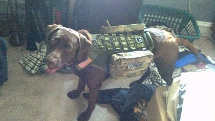 My dog is ready!! (Zombie Outbreak Tactical Response Team K-9 Unit) FIXED!!! - Imgur