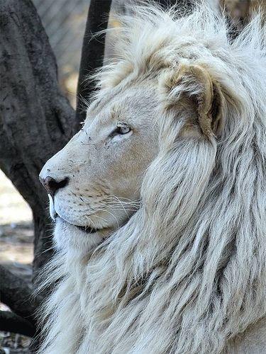 ~~lion by Arno Meintjes Wildlife~~
