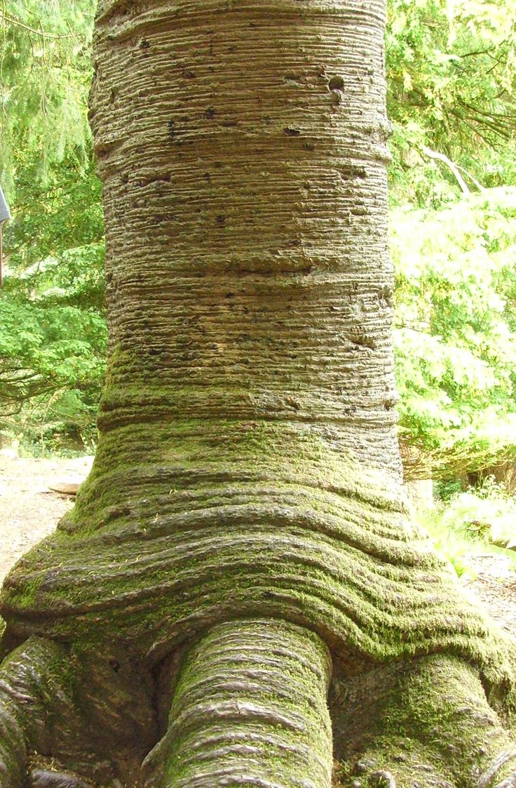 Weird Tree on way to Aira Force The Lake District Cumbria 2010