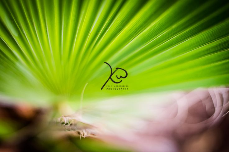 #nature #green #palm #abstract