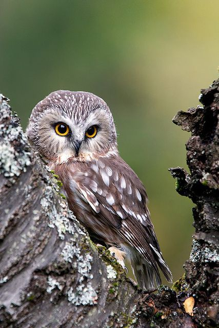 I have see many different owls.  Some American Indians see them as bad omens.  When traveling at night we often would see one swoop in front of the car.