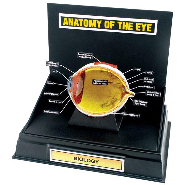 Anatomy Dioramas