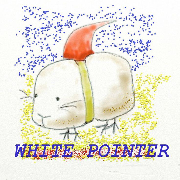 Shark Guinea pig White pointer
