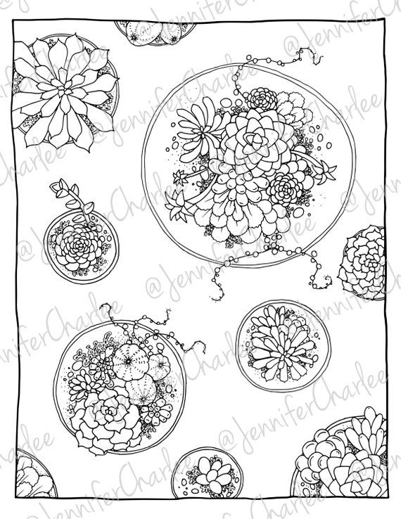 Succulents, Adult Coloring, Detailed Coloring, Digital