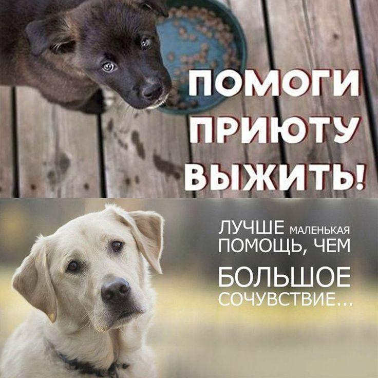 """Дорогие друзья земляки наши балхашцы все у кого доброе сердце обращаемся к вам! ОО """"ЧиП"""" - """"Твори Добро"""" города Балхаша (приюту для бездомных и попавших в беду животных) НУЖНА ВАША ПОМОЩЬ!!! ДЛЯ ОБУСТРОЙСТВА ДОПОЛНИТЕЛЬНЫХ ВОЛЬЕРОВ И ОГРАЖДЕНИЯ УЧАСТКА НАМ ОЧЕНЬ НЕОБХОДИМЫ МЕТАЛЛИЧЕСКИЕ ТРУБЫ (ДИАМЕТРОМ ОТ 20 СМ) ОБРЕЗКИ МЕТАЛЛИЧЕСКИХ СТОЯКОВ ПЕСОК ЦЕМЕНТ ДЕРЕВЯННЫЕ БРУСКИ И ПР. Будем рады любой помощи в виде строительных материалов и последствий вашего ремонта пригодных для строительства…"""