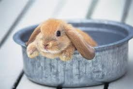 Résultats de recherche d'images pour «lapin»