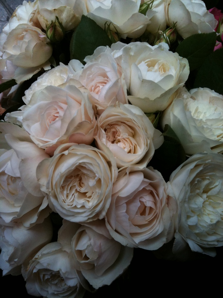 Love Garden Roses: Pin On Flowers We Love