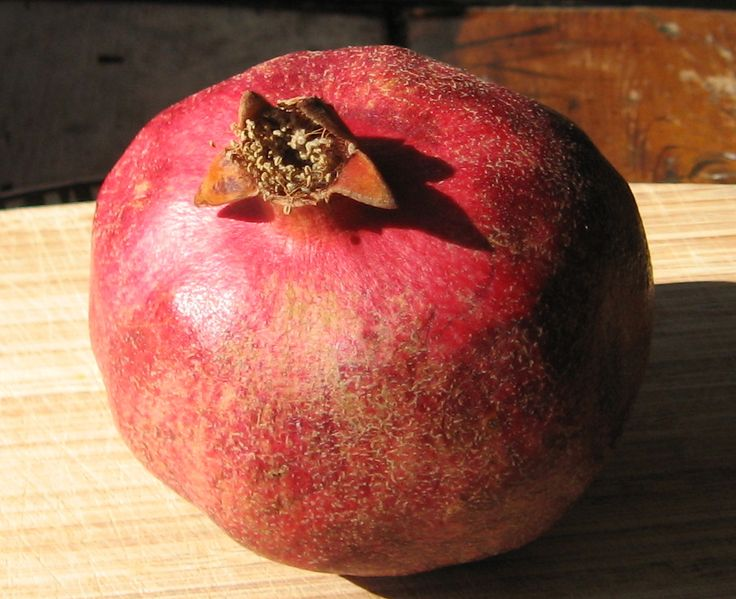Pomegranates and the art of herbivore attraction   The Botanist in ...