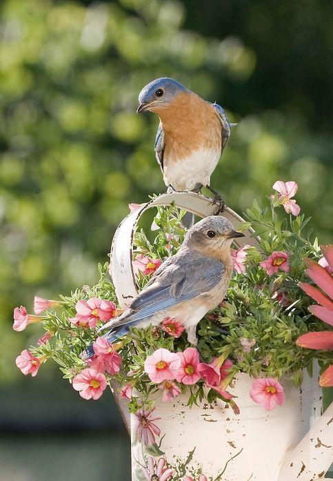 Fåglar och blommor.. en million bell, hade just den färgens på terasssen förra sommaren