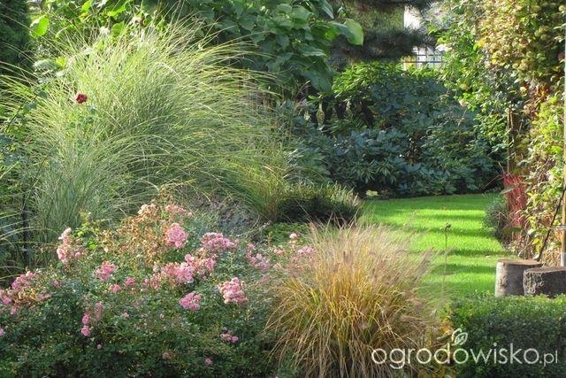 Pokażę nasz ogród - strona 305 - Forum ogrodnicze - Ogrodowisko