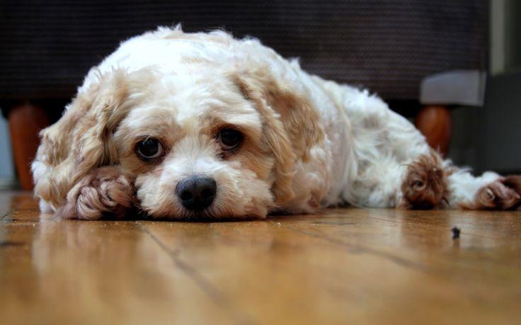 #365Toowoomba: Saturday, January 11: Are all Dogs Photogenic?