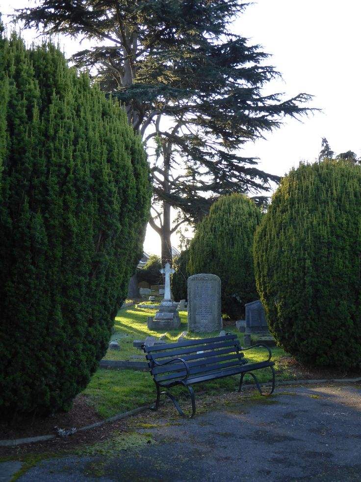 English Evergreens. Sit and consider.  Molesey Cemetery, Surrey.