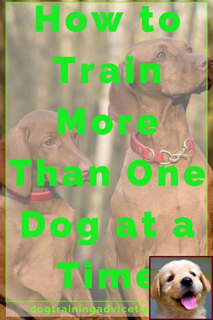 House Training A Puppy Yorkie And Dog Behavior Jokes Dog