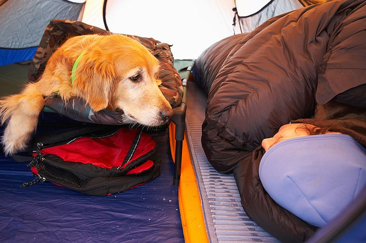 Be prepared to take your pet (dog) camping. this is a great article.
