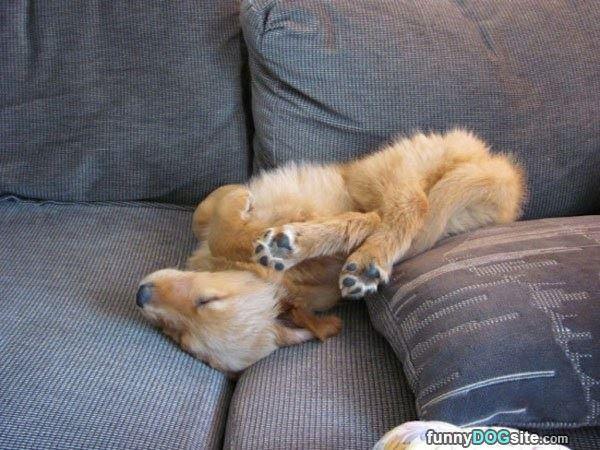 25 photos de chiens pas très « fut-fut » : le 10 est vraiment très drôle et vous fera votre journée !
