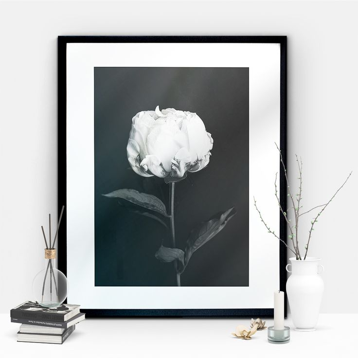Peonies, are they not the perfect flower?