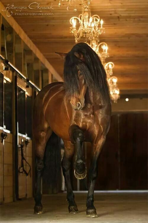 The horse is STUNNING, but can we just take a moment to reflect on the light fixtures in the barn. Chandeliers = AWESOME!