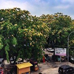 #batam #tree