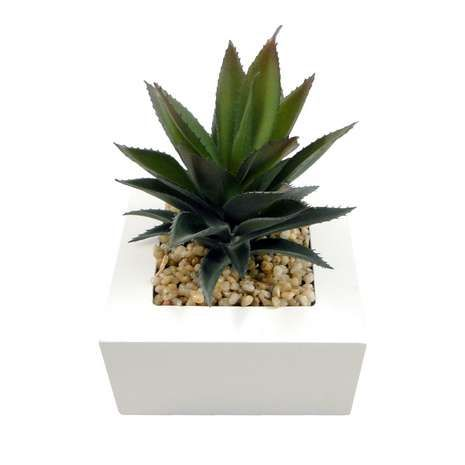 Succulent Potted Cactus | Dunelm