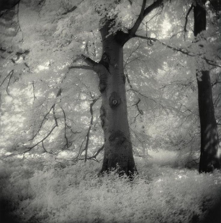 Schloßpark Türnich, May 2012  Holga 120N, Efke IR820 (715) in eco film developer Fotokemika Varycon matt two tray Catechol & SE6 Blue bleach 1+200 50 secs, MT3 50+15+900ml