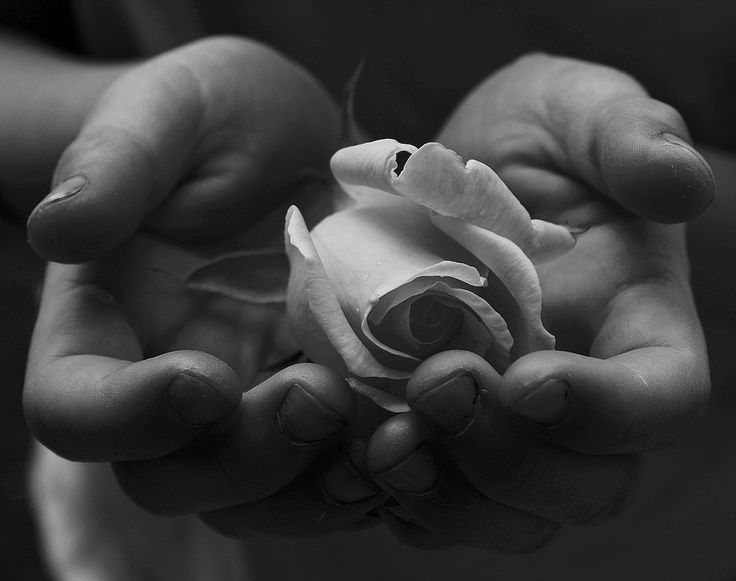 95 best images about baby and child 39 s hands on pinterest for Hand holding a rose drawing