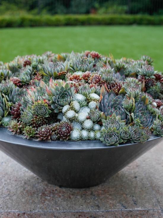 Succulents Design, Pictures, Remodel, Decor and Ideas - page 14: Bowls Design, Gardens Ideas, Pots Incorpor, Succulents Bowls, Succulents Gardens, Succulent Bowls, Flowers Pots, Cactus Planters, Gardens Succulents