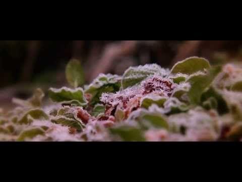 ▶ Canon EOS 60D Macro photography - YouTube