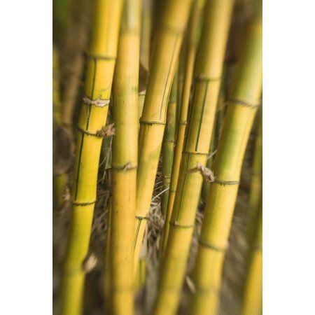 Die besten 25+ Bamboo stalks Ideen auf Pinterest Reiseladen - bambus garten design