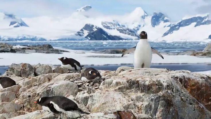 Lazy penguinlapse on Vimeo