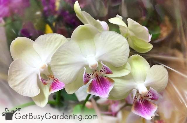 15 Indoor Plants That Are Safe For Cats And Dogs Orchid Plant Care Orchid Care Orchid Plants