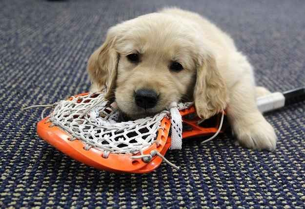 These 8 Puppies Posing With Denver Outlaws Lacrosse Players Will Make Your Day