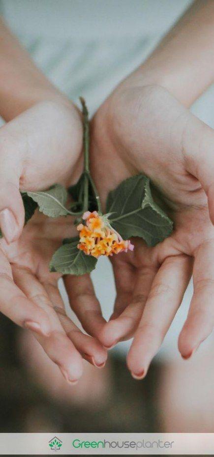 57 Ideen für die Fotografie Blumen Frau Gärten,  #Blumen #die #Fotografie #Frau #für #Garten …