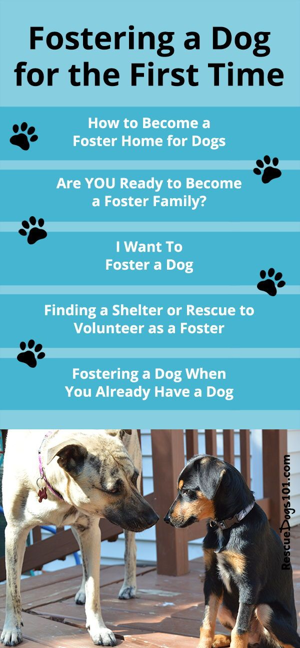 How To Foster A Dog Dog Boarding Facility Foster Dog Dog Grooming