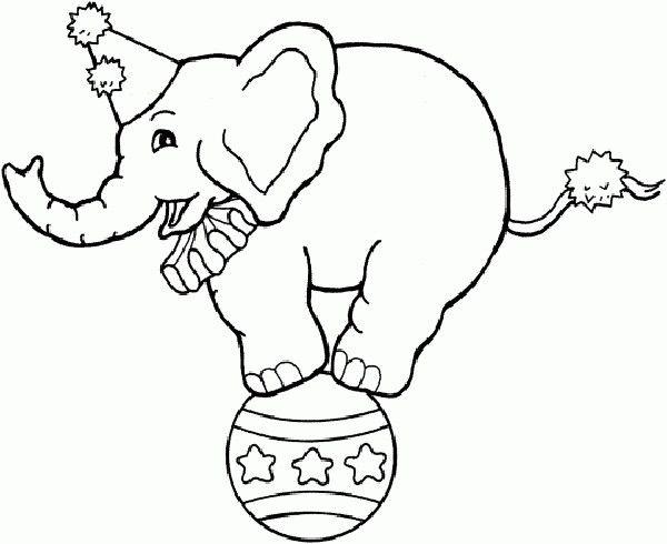 Best 20 Circus elephants ideas