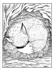 Fox Coloring Page By Sheri McClure Pitler